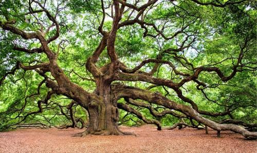L'amore per gli alberi è fonte di crescita spirituale e consapevolezza
