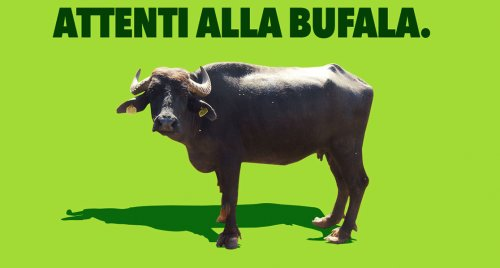 Ribes nigrum: la grande e redditizia bufala.